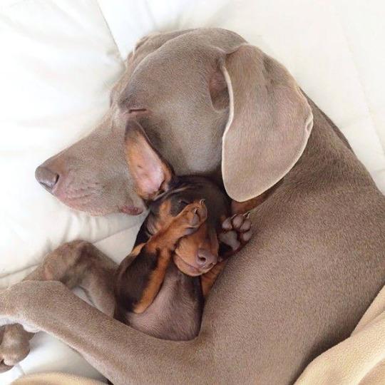 dog pals 5