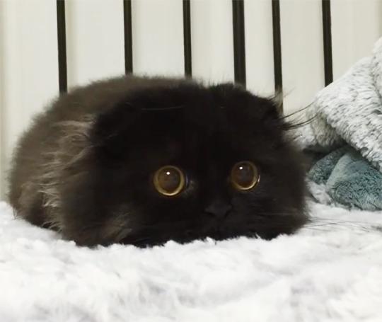 wide eyes 1