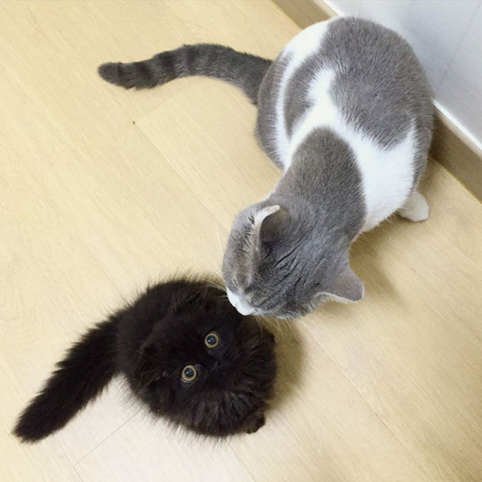 wide eyes and sibling 1