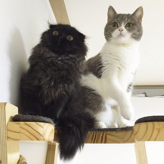 wide eyes and sibling 2