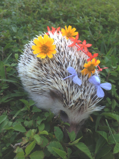 flower hedgie 1