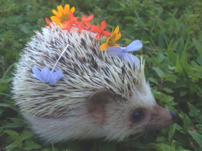 flower hedgie 2