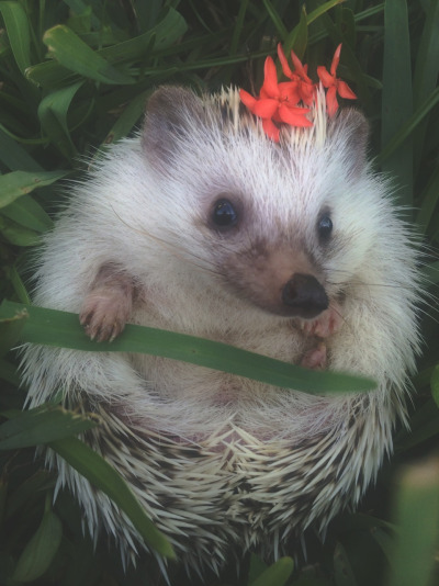 flower hedgie 3