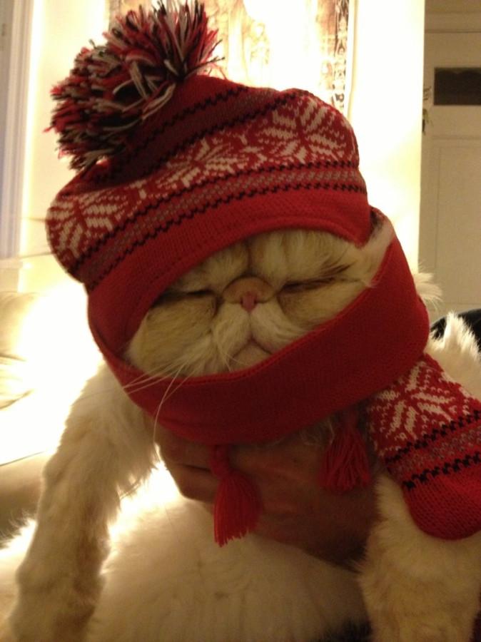 bundled up kitty