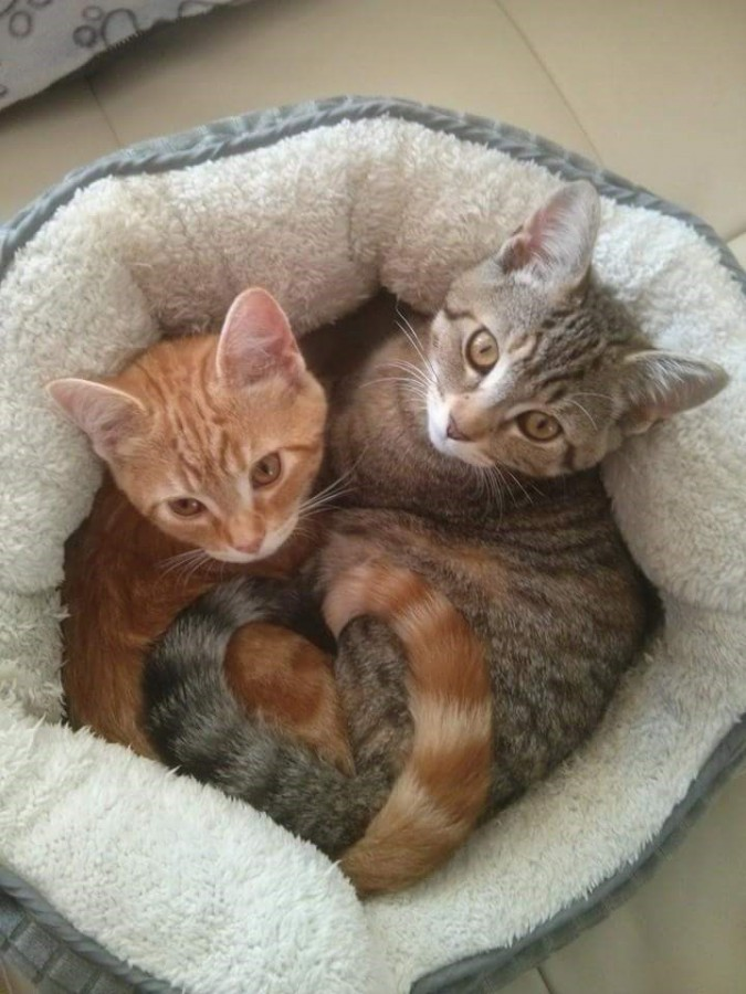 heart tail cats