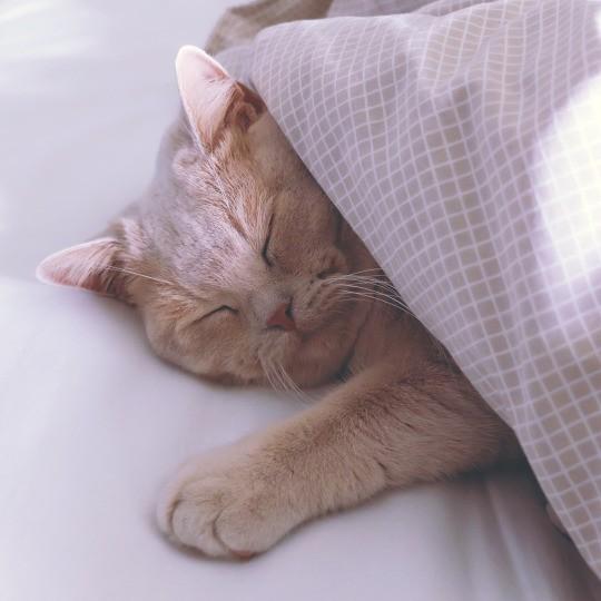 sleepin cat