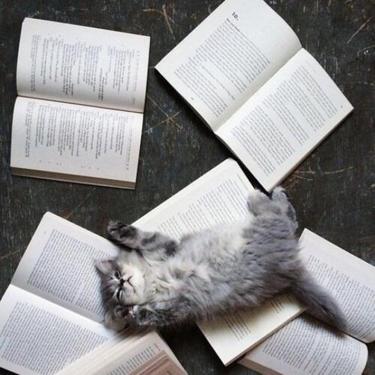 studious kitten