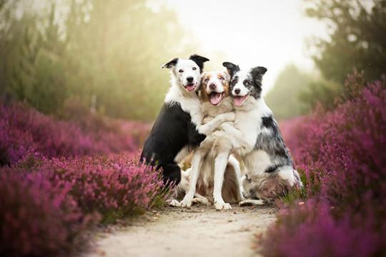 dog pals 6