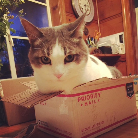 postal kitty