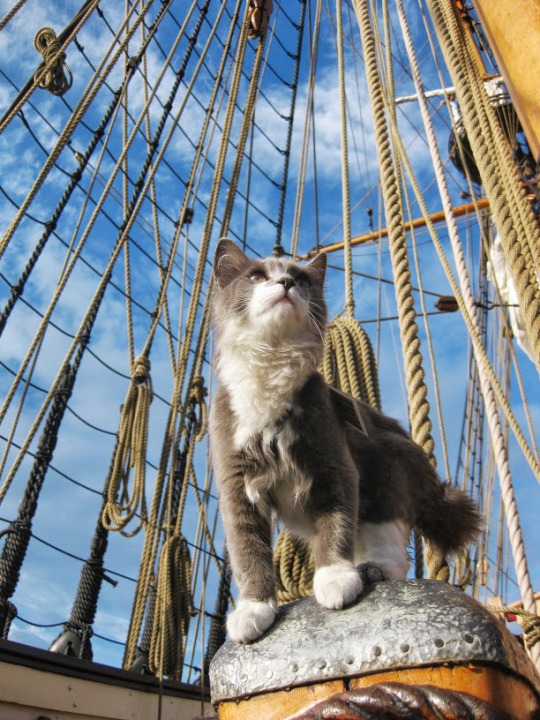 ship cat