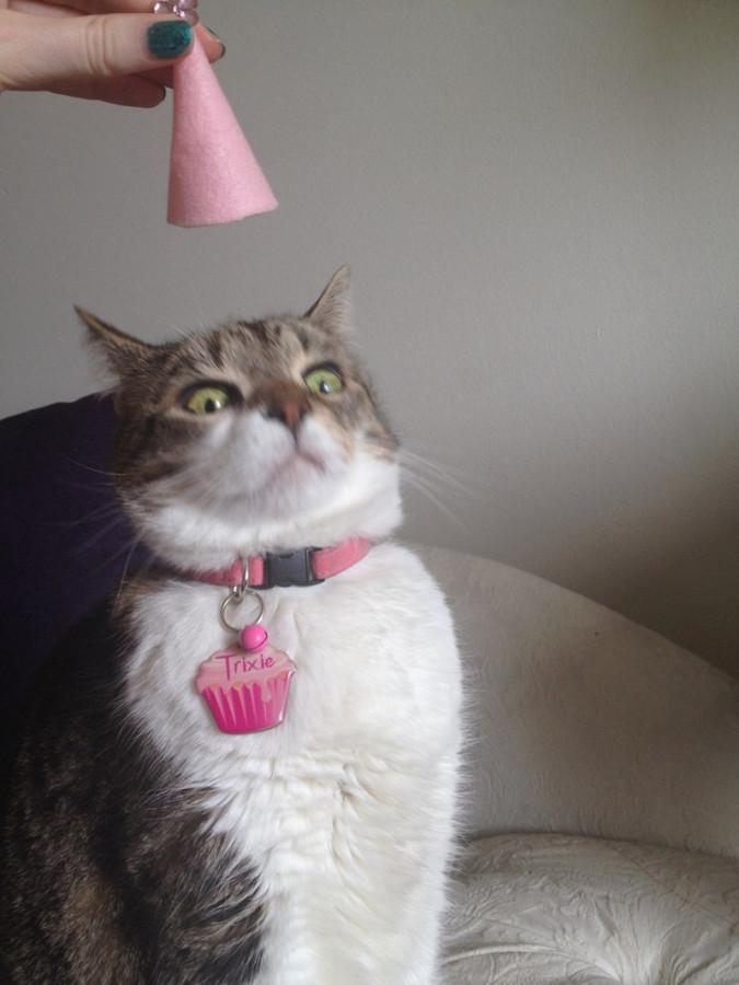 trixie hates birthday