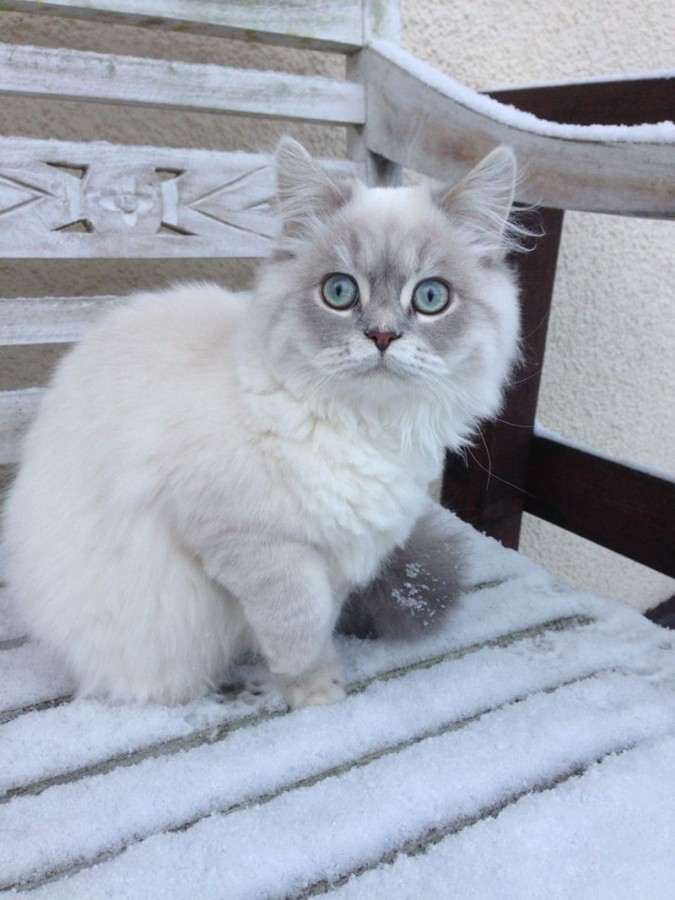 winter is here cat