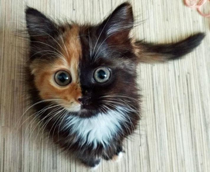 yana cat