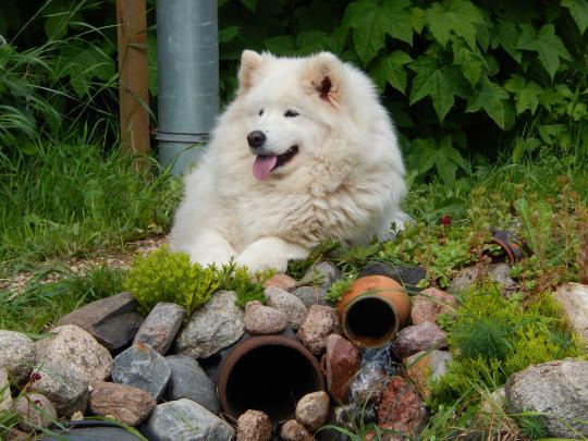 floof dog