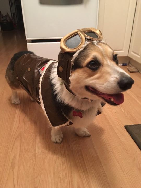 aviator pup
