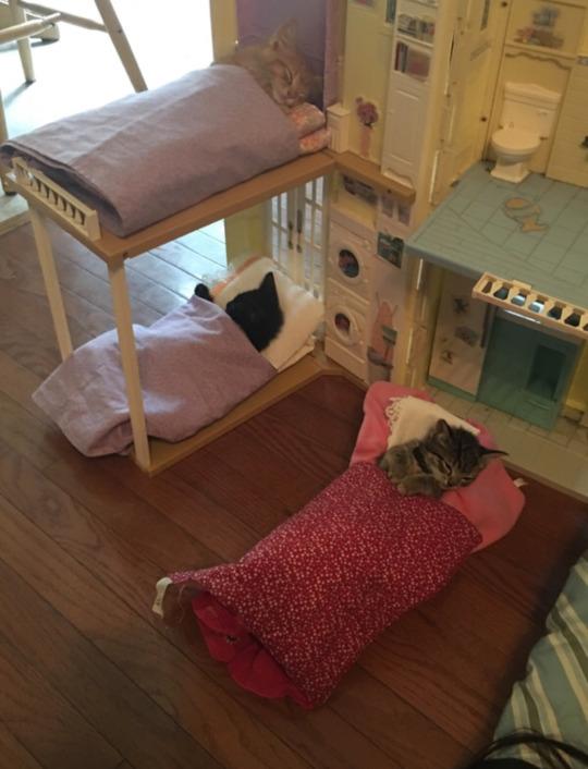 dollhouse kittens