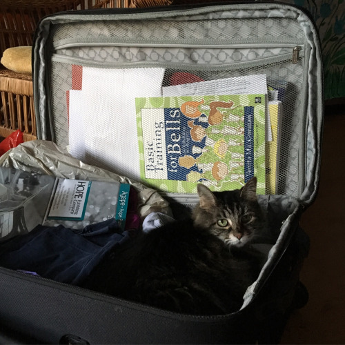 luggage cat 2