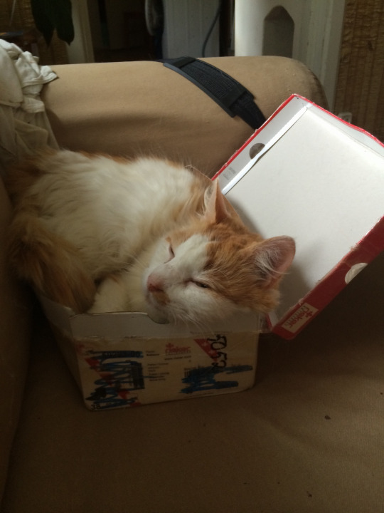 rufus o the shoebox