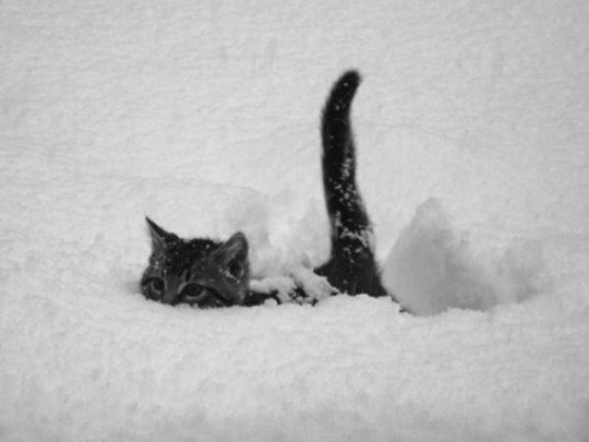 snow plow cat