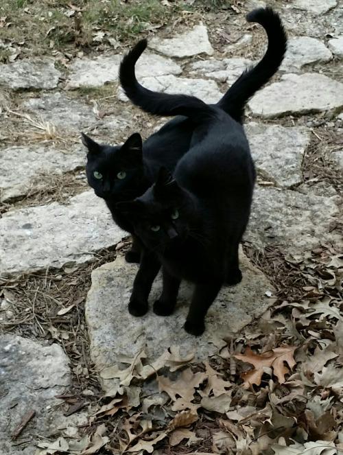 black pair
