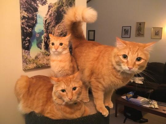 ginger trio