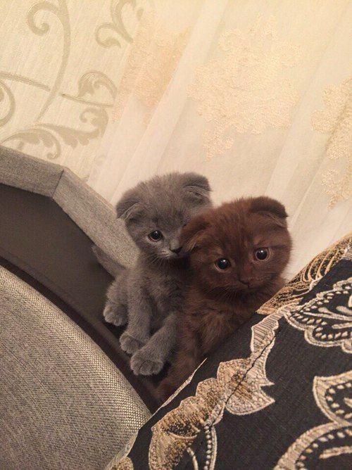 nervous kittens