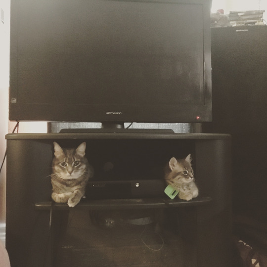 television cats