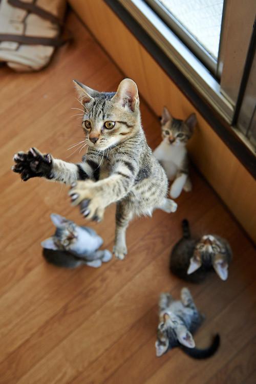 leap cat