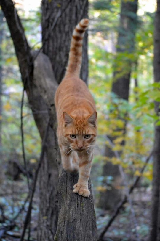 poly forest stalker