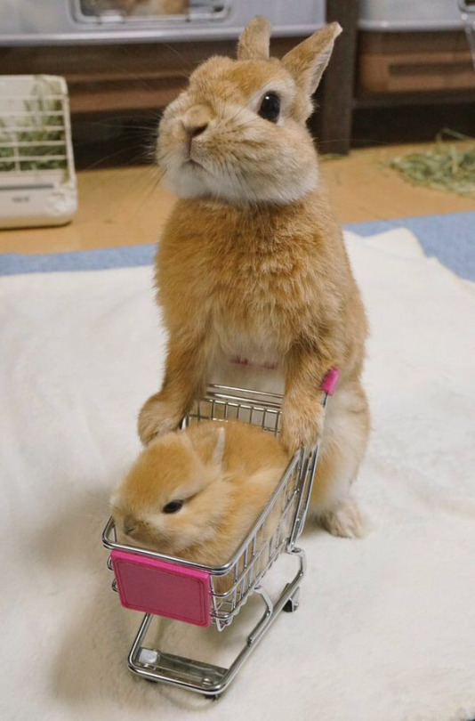 bun goes shopping