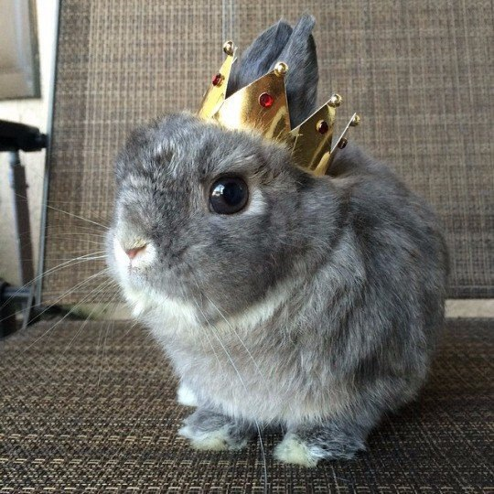 bunny princess