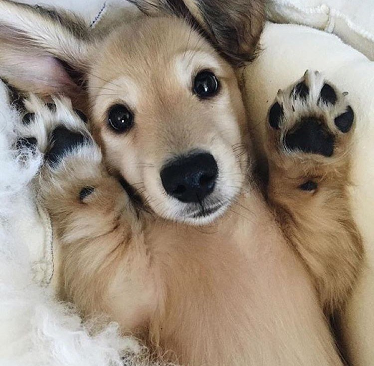 paws up pupper