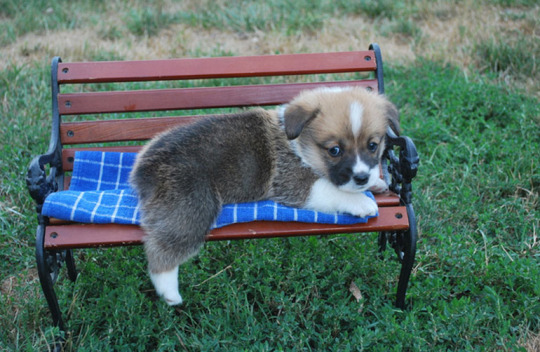 tiny puppy bench