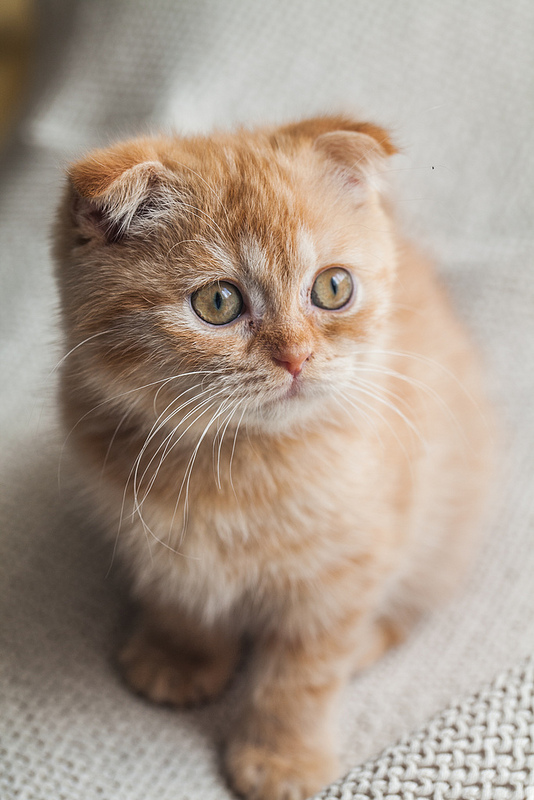 scairt kitten