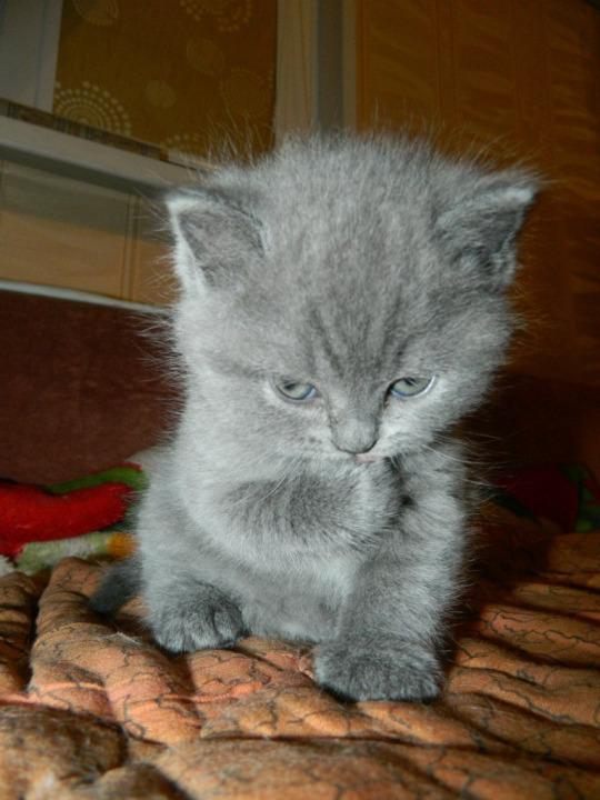 plotting kitten