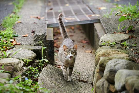 stride cat