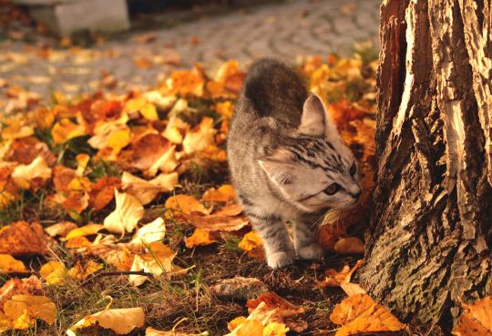 autumn sniffy cat