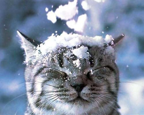 snow on cat