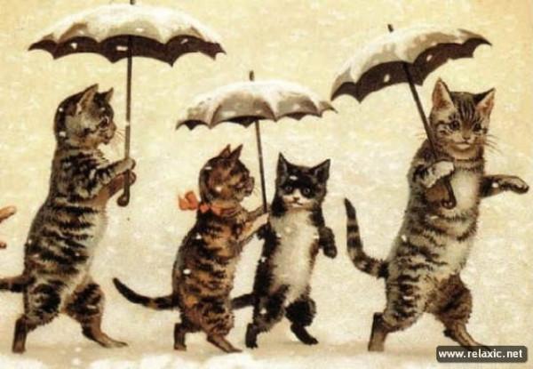 feline-world_00034.jpg