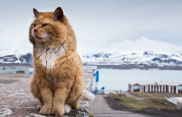 Шпицберген – архипелаг одного кота