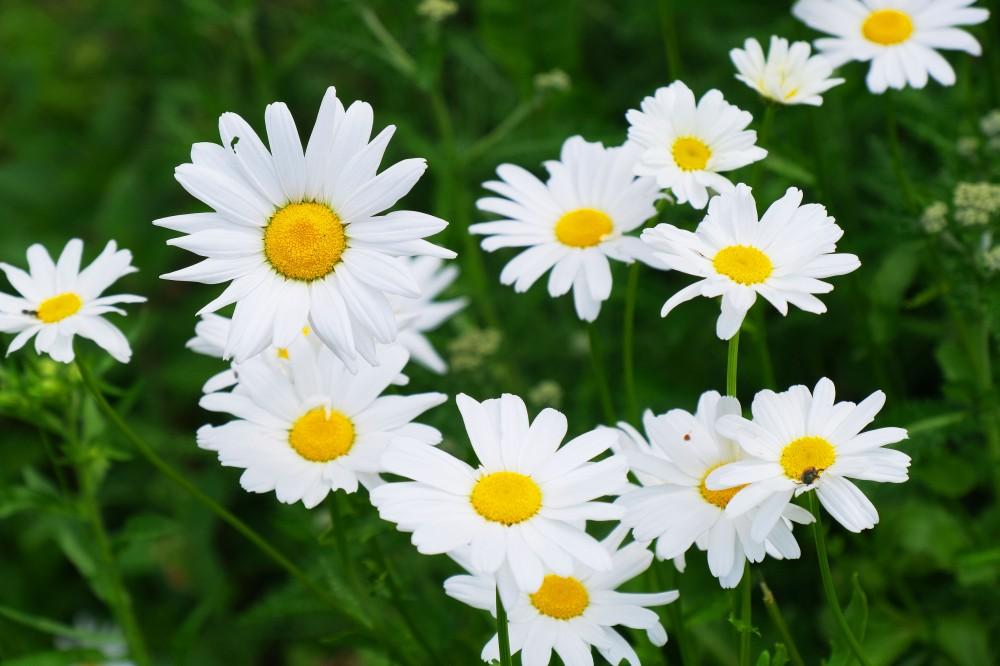 Павшинские цветники