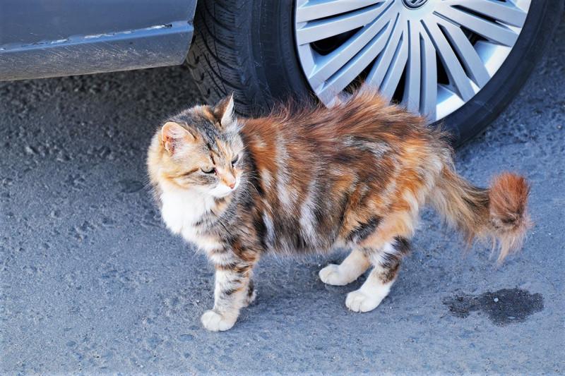 У кошки четыре ноги...