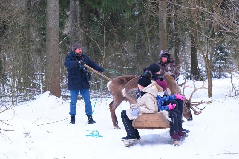 Алексей помогает каюру управиться с оленями.