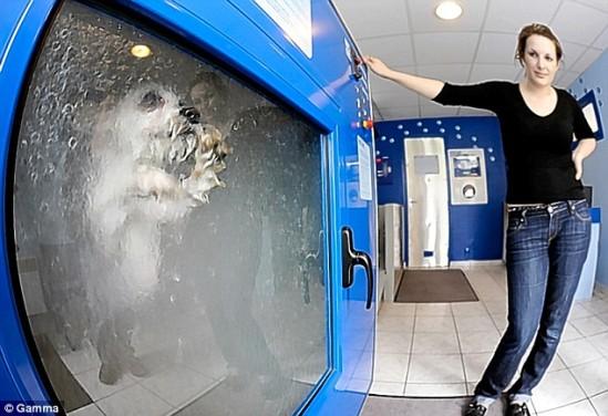 собака, душевая кабина