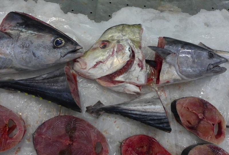 fish-face.jpg