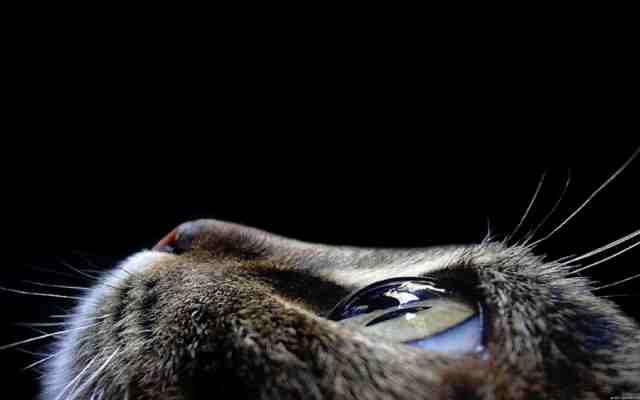 Воскресные кошаки ( 10 фоток )