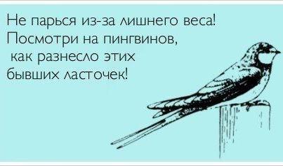 268707_408970145828426_252195106_n