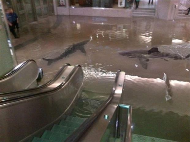 Два дельфина назначили себе встречу у эскалатора, нет проблем