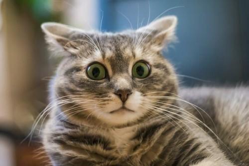 Котик в недоумении
