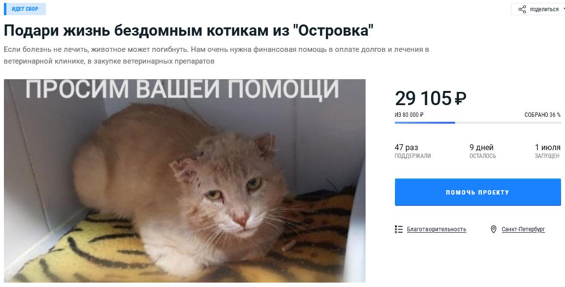 Помочь кошкам